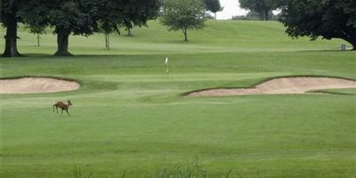 Stowmarket Golf Club
