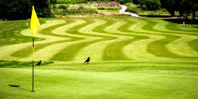 Morriston Golf Club